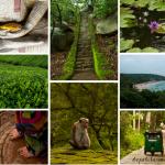 Resumen del viaje a Sri Lanka