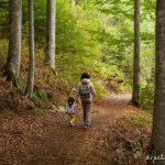 Road trip por Alsacia y Selva Negra con niños