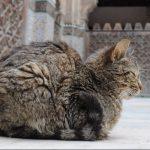 Apuntes sobre nuestros viajes por Marruecos